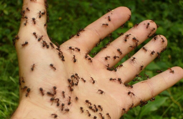 How to get rid of ants from home: natural tricks and remedies