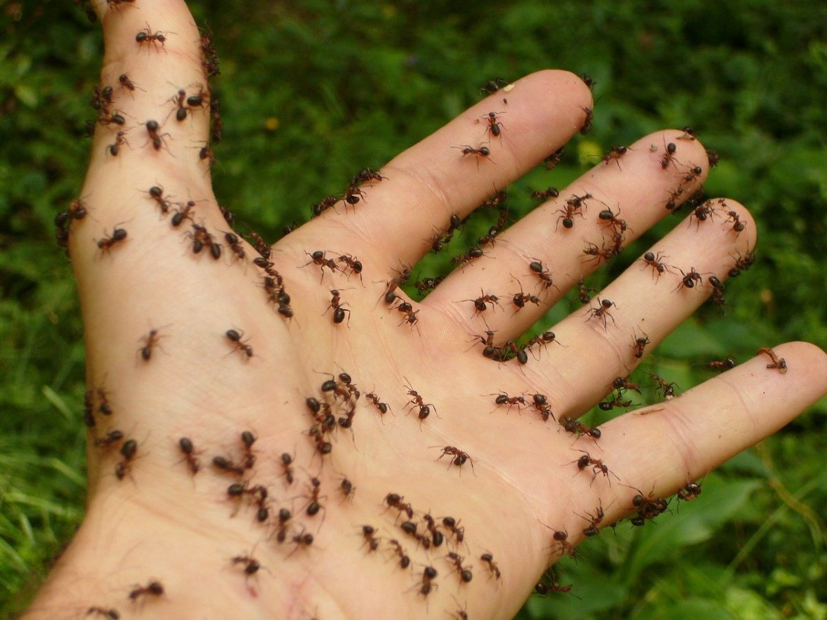 how to get rid of ants from home